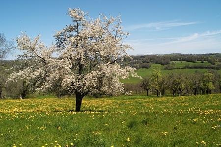 AAP Biodiversité des sols et agro-écologie