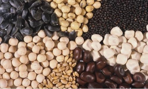AAP semence et sélection végétale